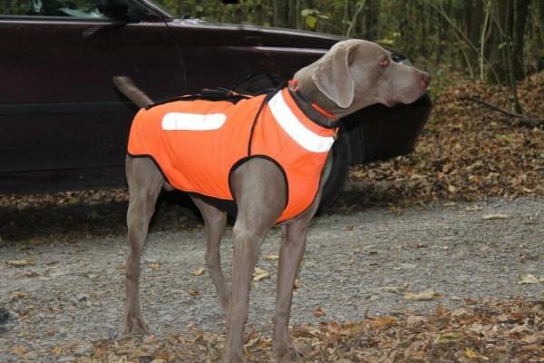 Hunde-Schutzweste Modell 2016